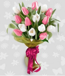 1 dozen of pink and white tulips